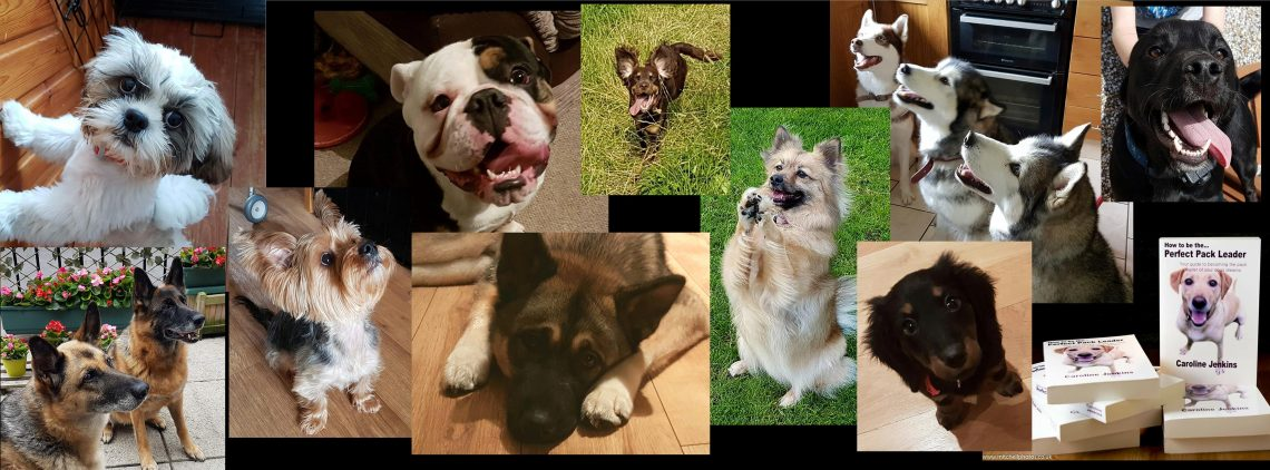 gooddoggie dog training client pictures